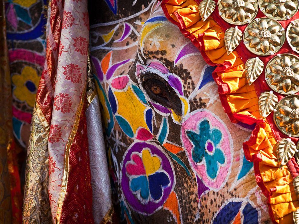 Elephant-Festival-